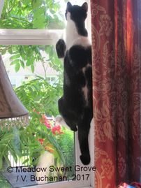 Picture of cat climbing window
