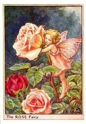 Drawing Rose Fairy by Cicely Mary Barker